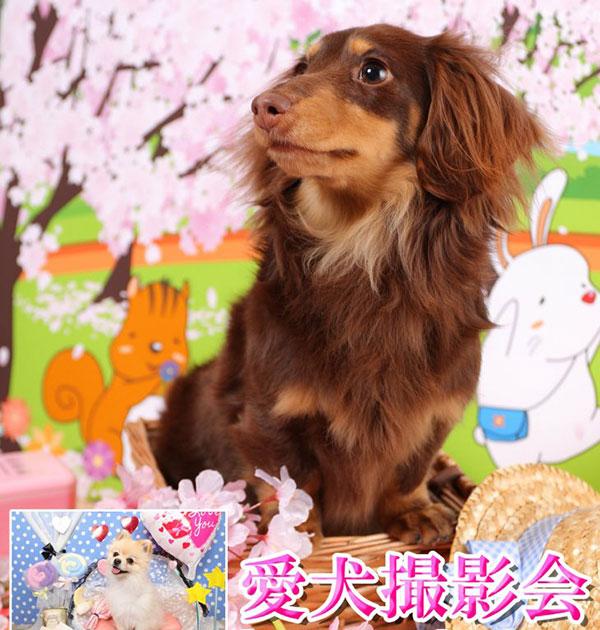 愛犬撮影会イベント