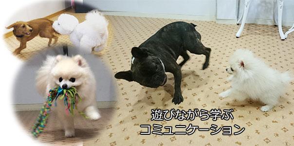 犬の社会化 犬同士のコミュニケーション