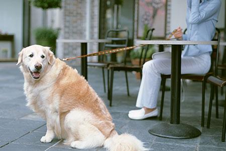 犬と人を結ぶドッグトレーニング