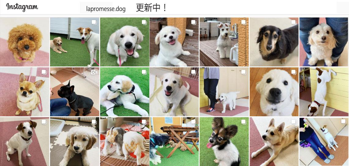 犬の保育園生徒さんギャラリー