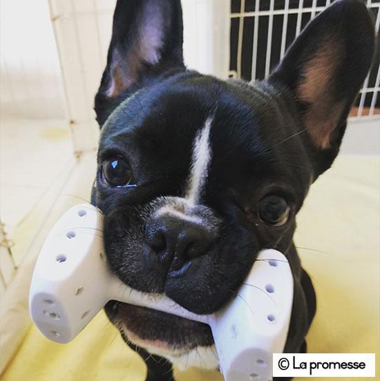 犬の保育園生 フレブル
