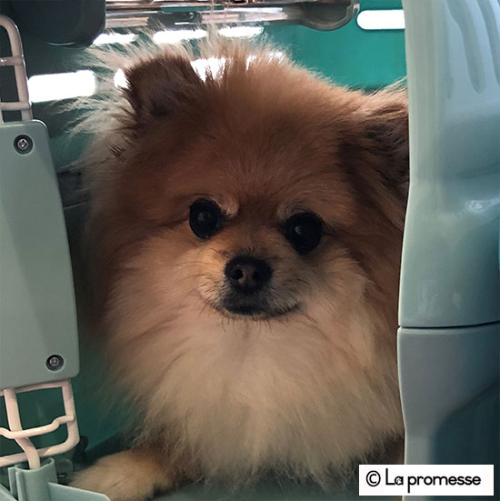 犬の保育園生 ポメ