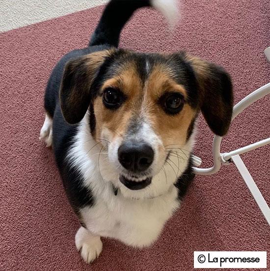 犬の保育園生 ビーグル