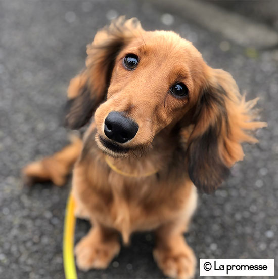 犬の保育園生 MD