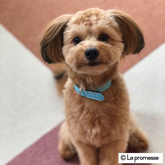 犬の保育園生 トイプードル