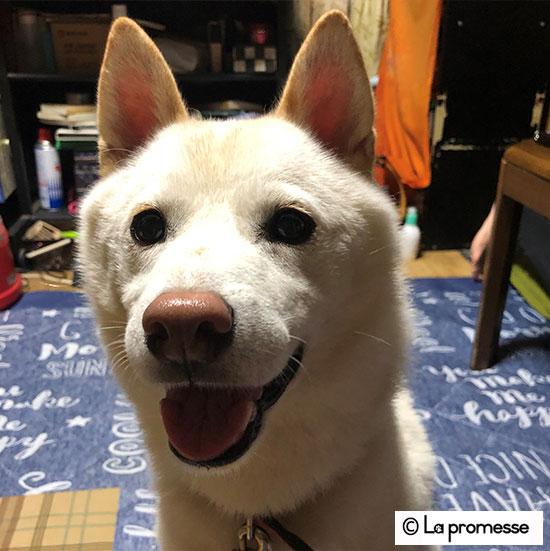 犬の保育園 生徒さん