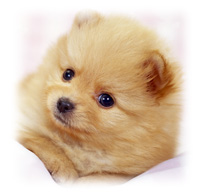 犬のお預かりイメージ