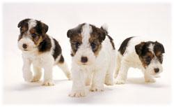 犬の保育園(幼稚園)イメージ