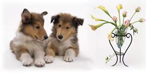 犬の保育園イメージ
